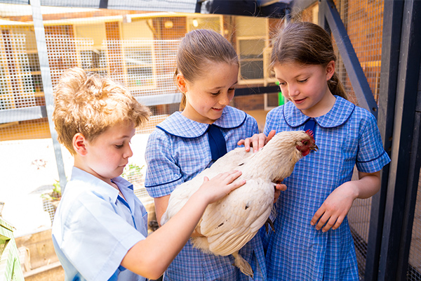 St Therese Catholic Primary School Mascot Student Showcase Chicken Coop